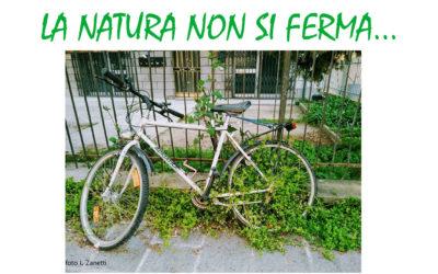 La natura non si ferma
